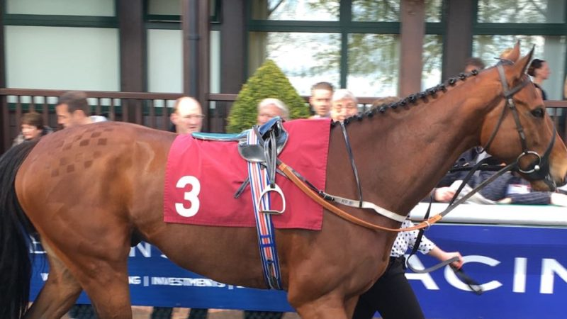 Hope Eden Racing's You're Fired - Champion Gelding - Own a Racehorse